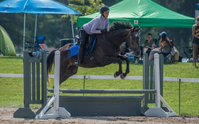8 Self-Regulation in Horses – is your horse ready to learn?