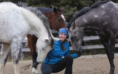Tips and Tricks to Make Buying a Horse a Breeze